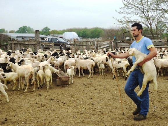 κτηνοτροφοι