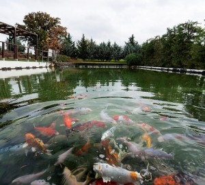 Άποψη της λίμνης που έχει δημιουργηθεί στο εργοστάσιο Σχηματαρίου η οποία τροφοδοτείται με νερό που προκύπτει από το σύστημα βιολογικού καθαρισμού που λειτουργεί στις εγκαταστάσεις.