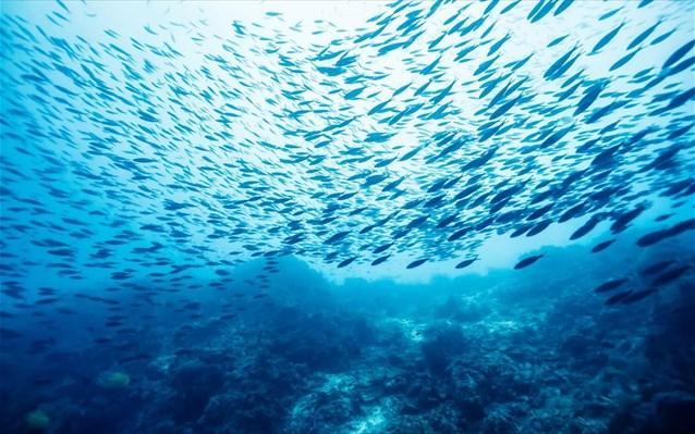 Η θάλασσα χάνει το οξυγόνο της - Magnesia News 38099c5a68b