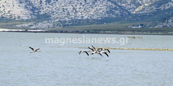 Κρούει τον κώδωνα του κινδύνου ο «Δημόκριτος» με στοιχεία της «Οικολογικής Θεσσαλίας» για την λίμνη Κάρλα
