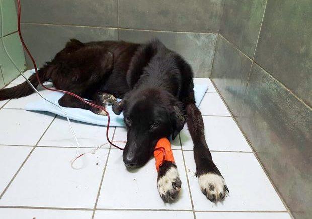 Ανεγκέφαλος στο Βόλο έβαλε ζωντανό σκυλί σε σακούλα και το πέταξε στα σκουπίδια