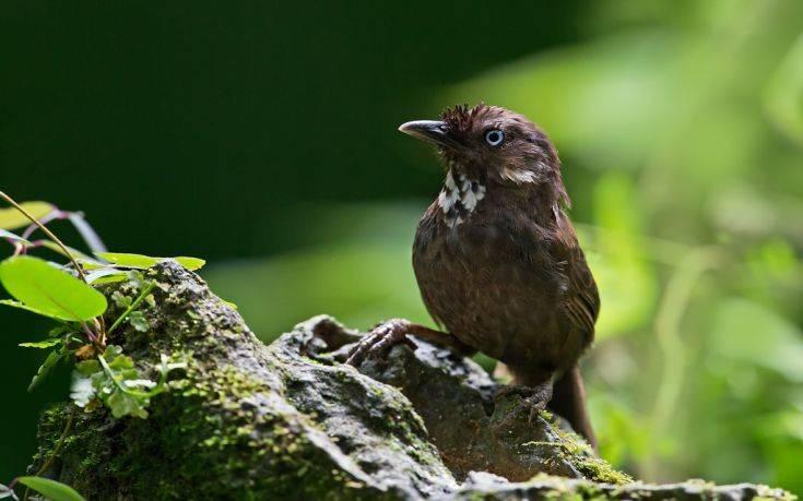 1b7c3f5bf7b Σπάνια πουλιά φέρνουν ευημερία σε απομονωμένο χωριό - Magnesia News
