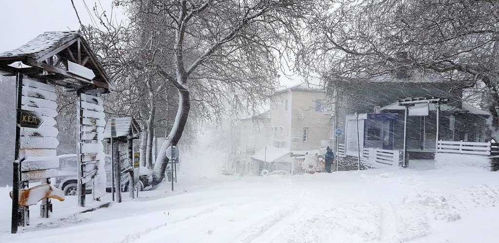 Αποτέλεσμα εικόνας για πορταρια μαγνησιας χιονισμενη